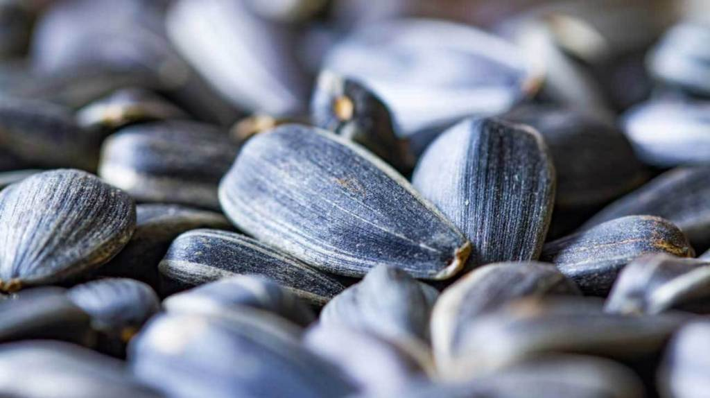 Top Foods to Keep your Immune System Strong Sunflower-seeds-1296x728-feature